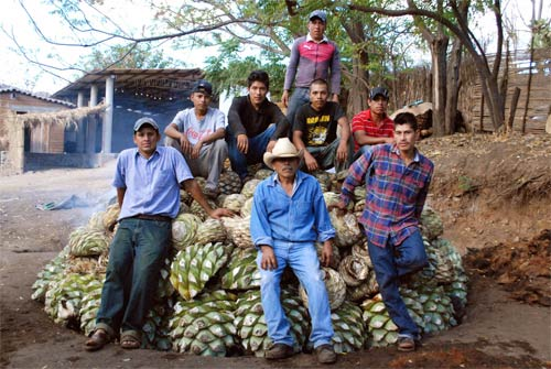 Approximately 4 tons of agaves can be treated during every process.